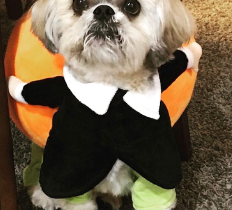 Halloween Contest Winner
