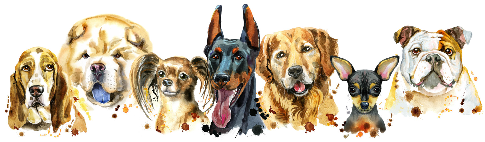 Hero Dogs: The Most Popular Hero Dog Breeds (Answers