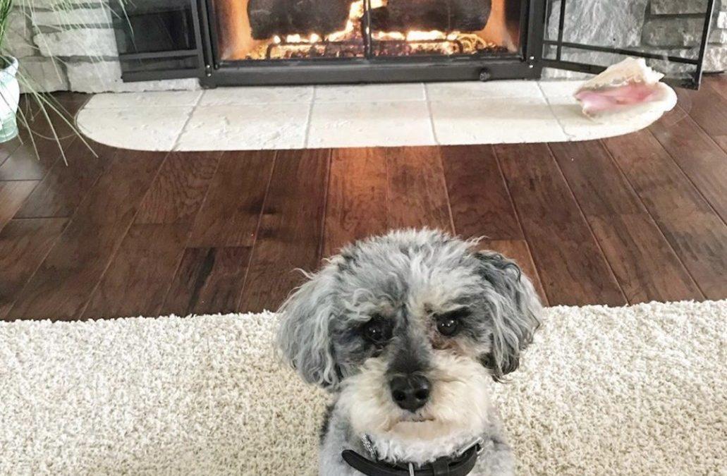 Saturday Rescue Spotlight: Mac