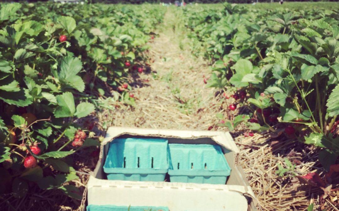 Sweet Strawberry Books